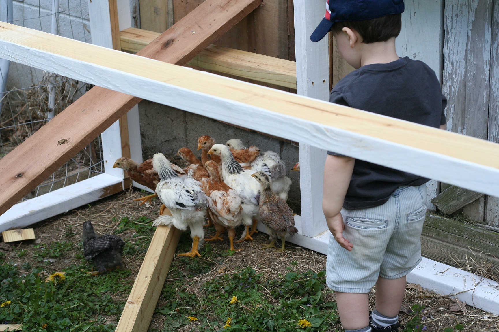 operation blanton farm / fresh eggs here | thelovelylauralife.com